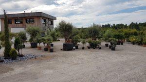 Jose Environnement Pepiniere Nouvel arrivage vegetaux de saison oliviers de toutes tailles palmiers graminées vivaces végétaux juillet