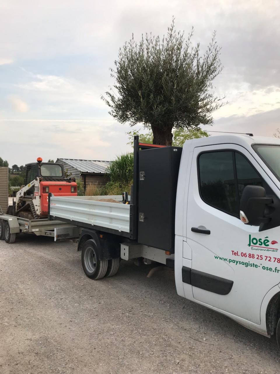Livraison d'un olivier centenaire